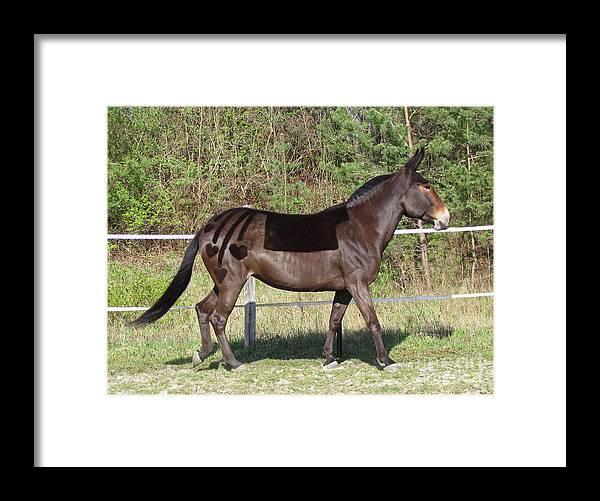 Mule Framed Print featuring the photograph Cascading Heatrs by Deborah Johnson