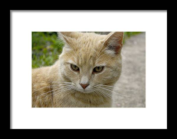 Animals Framed Print featuring the photograph Cat by Angela Partridge