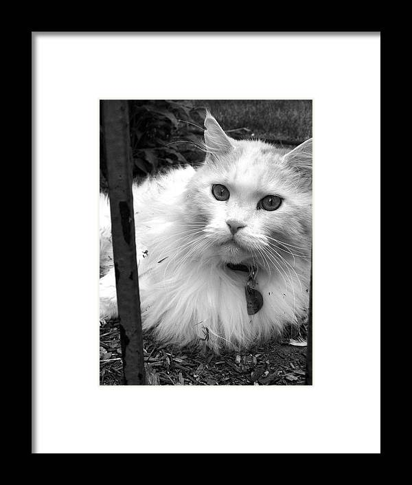 Cat Framed Print featuring the photograph Cat Eyes by Dan Stone
