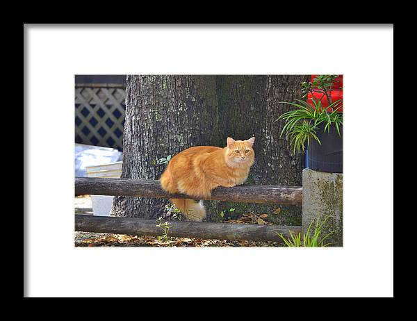Framed Print featuring the photograph Cat On The Fens by Katrina Johns