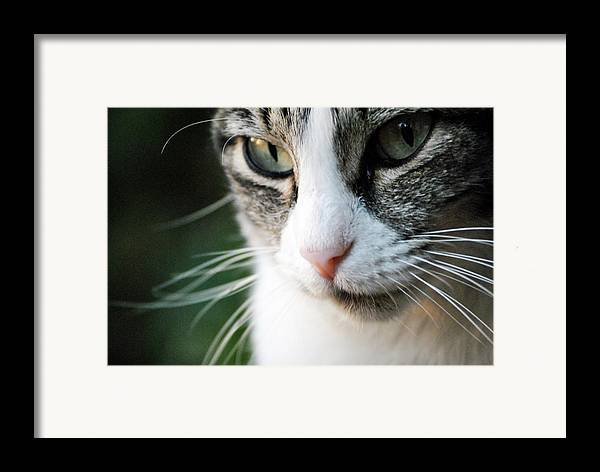Horizontal Framed Print featuring the photograph Cat Portrait by Julia Williams