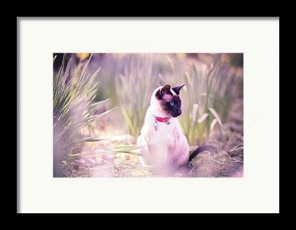 Horizontal Framed Print featuring the photograph Cat Sitting By Daffodils by Sasha Bell