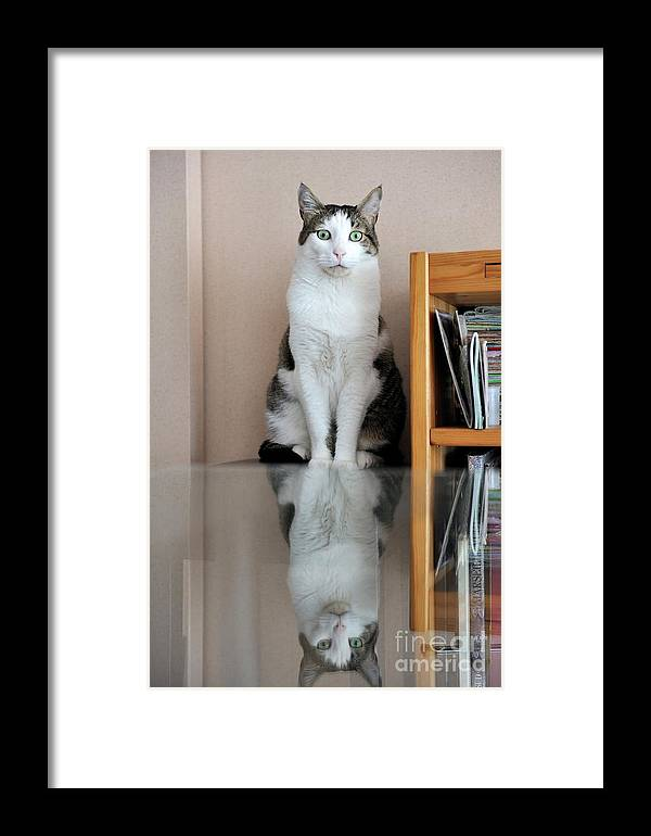 Individuality Framed Print featuring the photograph Cat Standing On Chair by Sami Sarkis
