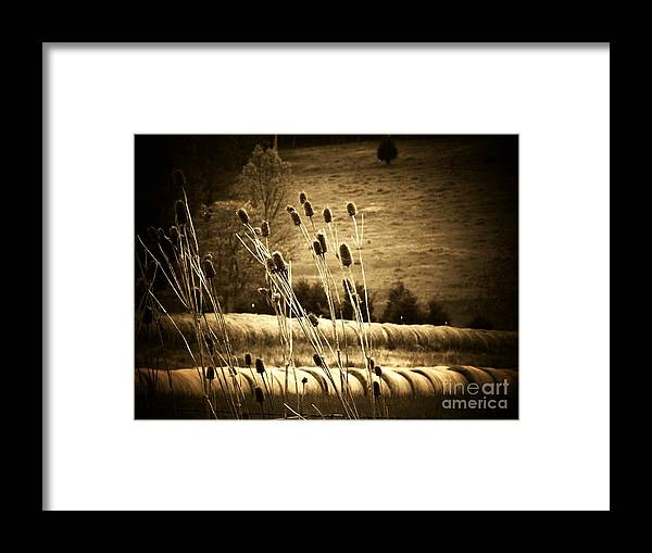 Cat Tails Framed Print featuring the photograph Cat Tails And Hay Rolls by Joyce Kimble Smith
