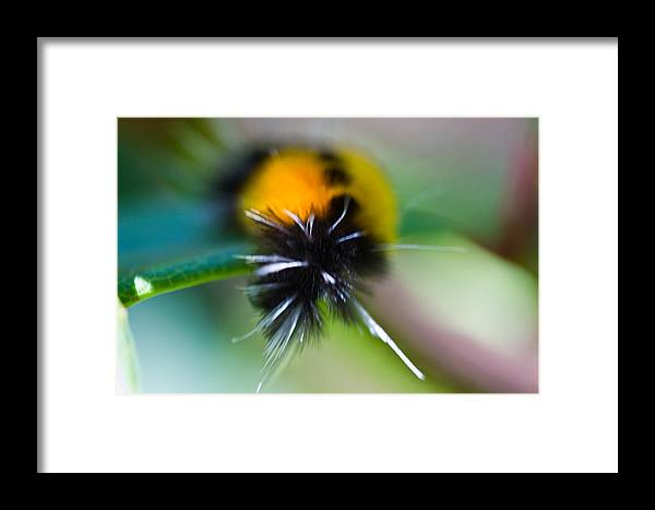 Caterpillar Framed Print featuring the photograph Caterpillar In Abstract by Marie Jamieson
