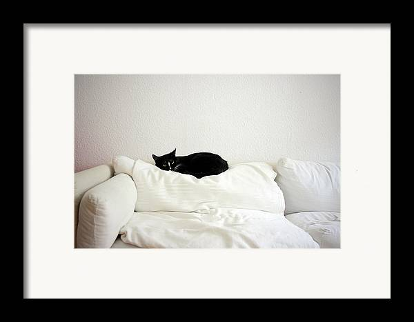 Horizontal Framed Print featuring the photograph Catheaven by Licensed Material
