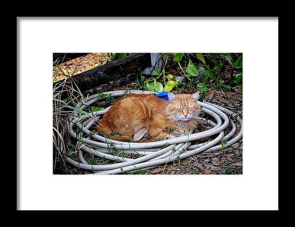 Framed Print featuring the photograph Cats Water Bed by Katrina Johns