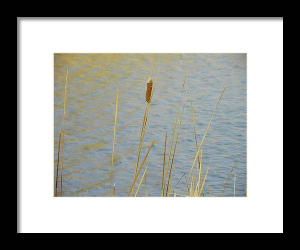Cat Tail Framed Print featuring the photograph Cattail by Vicky Mowrer