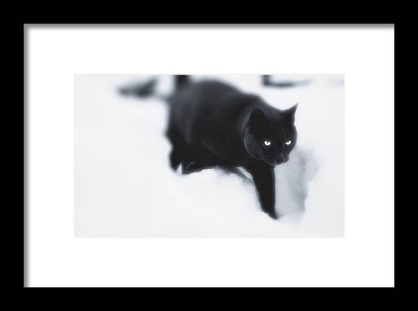 Cat Framed Print featuring the photograph Catz Eyes by Kevin Moore