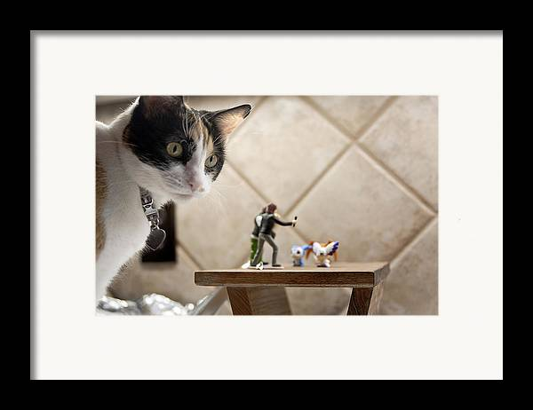 American Shorthair Framed Print featuring the photograph Catzilla by Melany Sarafis