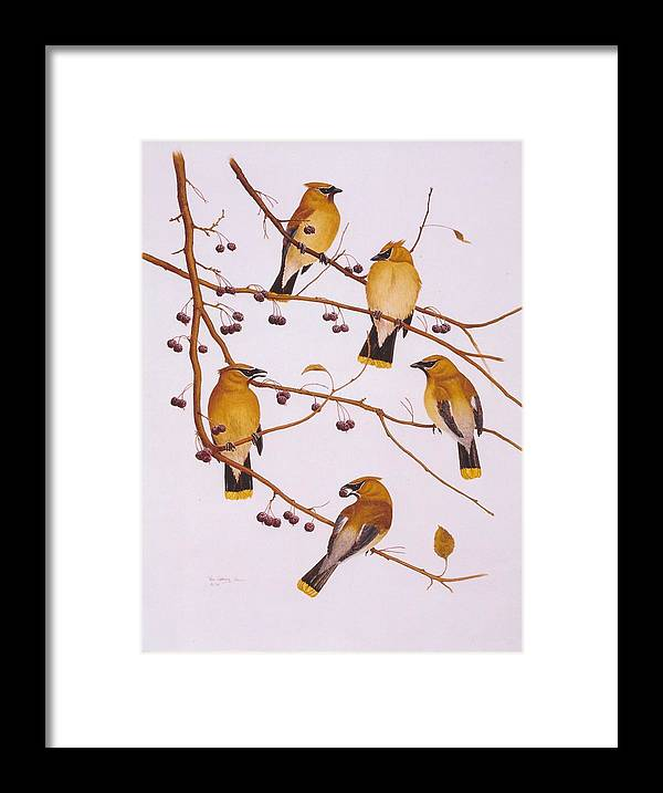Birds Framed Print featuring the painting Cedar Waxwing Flock by Bill Gehring