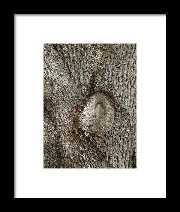 Tree Framed Print featuring the photograph Centered by Mary Hurst
