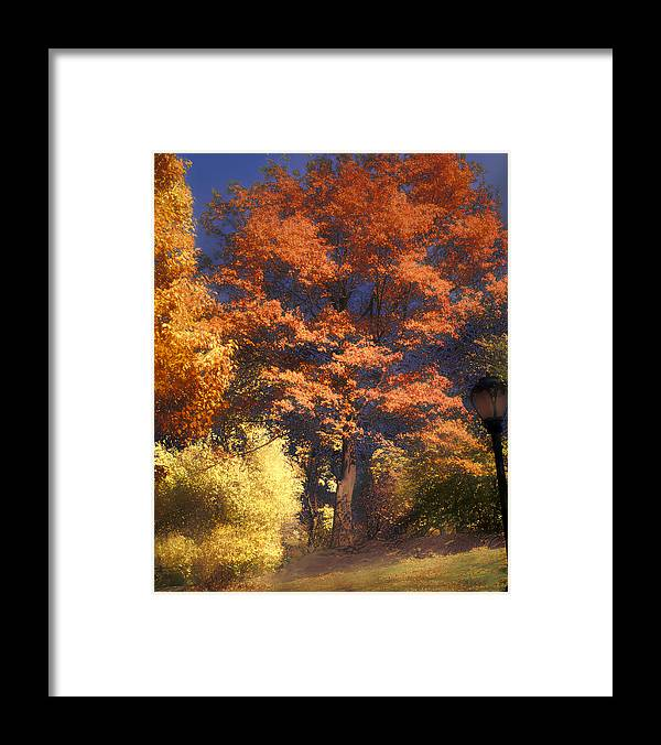 Autumn Framed Print featuring the photograph Central Park by Jim Painter