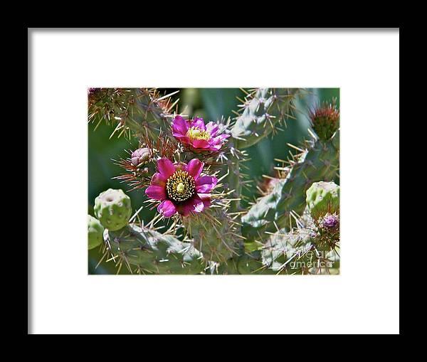 Desert Flower Framed Print featuring the photograph Chainfruit Cholla by Nicole Fleckenstein