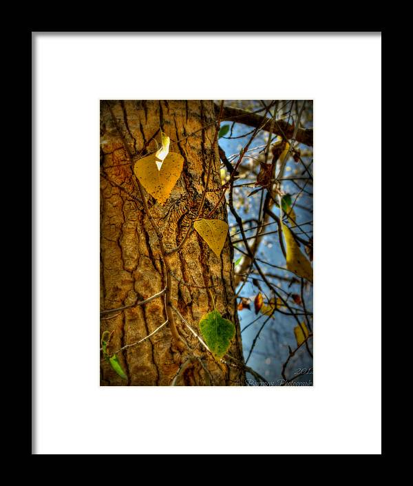 Prescott National Forest Framed Print featuring the photograph Changing Leaves And A Cottonwood Trunk by Aaron Burrows