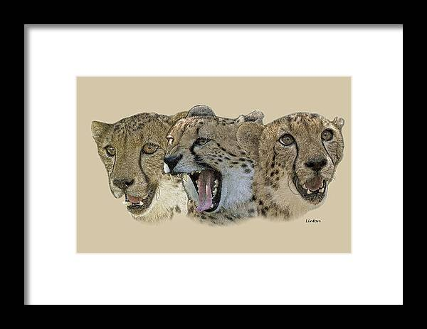 Cheetah Framed Print featuring the photograph Cheetah Faces 2 by Larry Linton