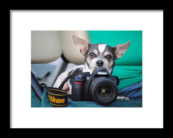 Framed Print featuring the photograph Chesse by Katrina Johns