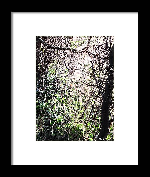 Chewing Gum Framed Print featuring the photograph Chewing Gum by Laura Hol Art