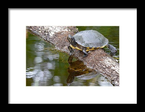 Chin Up Framed Print featuring the photograph Chin Up by Kathy Gibbons
