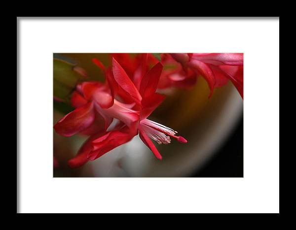 Christmas Framed Print featuring the photograph Christmas Herald Proclaims The Season by Wanda Brandon