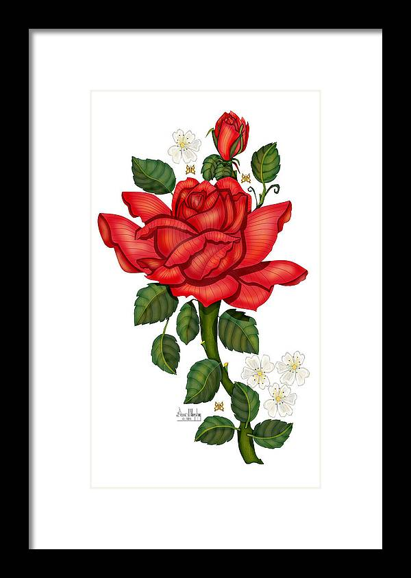 Hand-drawn Digital Art; Hand-drawn Digital Rose; Digital Rose; Anne Norskog Rose; Red Rose; Red Rose On White Background Framed Print featuring the painting Christmas Rose 2011 by Anne Norskog