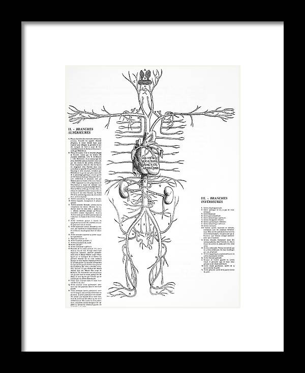 Circulatory System Framed Print featuring the photograph Circulatory System, 16th Century by