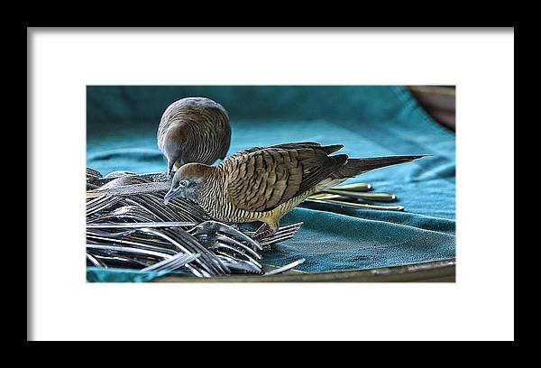 Birds Framed Print featuring the photograph Clean Up Crew by Linda Phelps