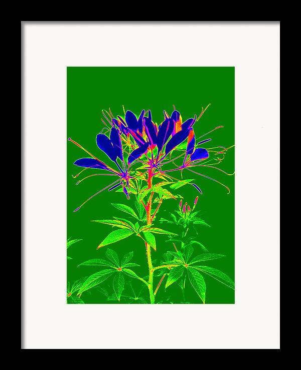 Computer Generated Flower Framed Print featuring the photograph Cleome Gone Abstract by Kim Galluzzo Wozniak