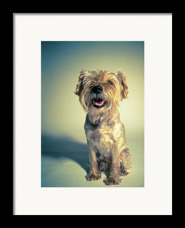 Vertical Framed Print featuring the photograph Cleveland Dog by Square Dog Photography