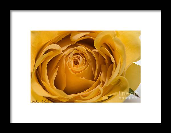 Flower Framed Print featuring the photograph Close Curls by Susan Smith
