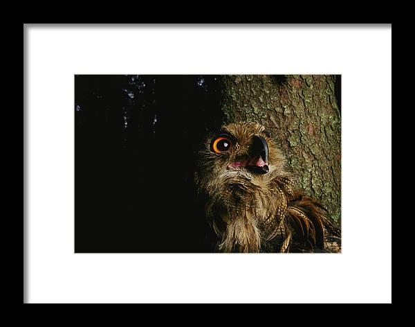 Anatomy Framed Print featuring the photograph Close View Of Owl Near A Tree Trunk by Mattias Klum