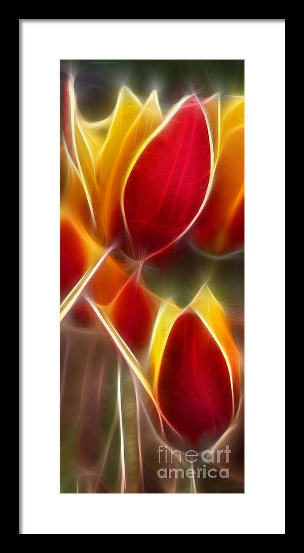 Cluisiana Framed Print featuring the digital art Cluisiana Tulips Triptych Panel 3 by Peter Piatt