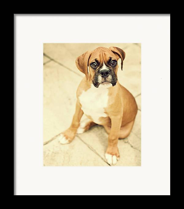 Vertical Framed Print featuring the photograph Clyde- Fawn Boxer Puppy by Jody Trappe Photography