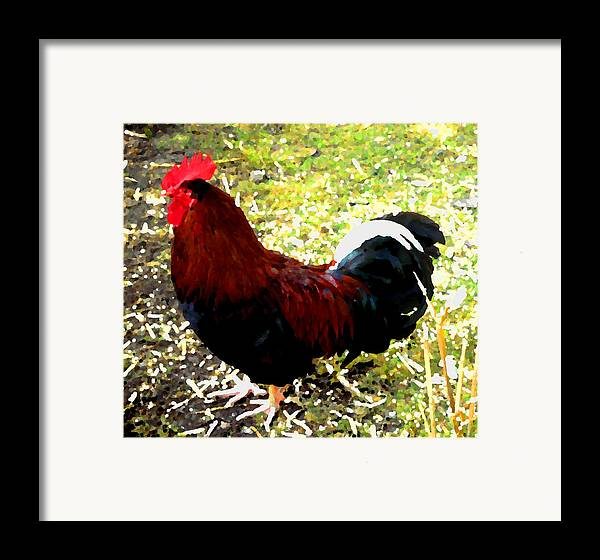 Cock Framed Print featuring the photograph Cock by Roberto Alamino