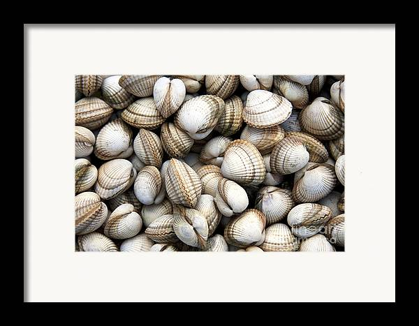 Animals Framed Print featuring the photograph Cockle Shell Background by Jane Rix