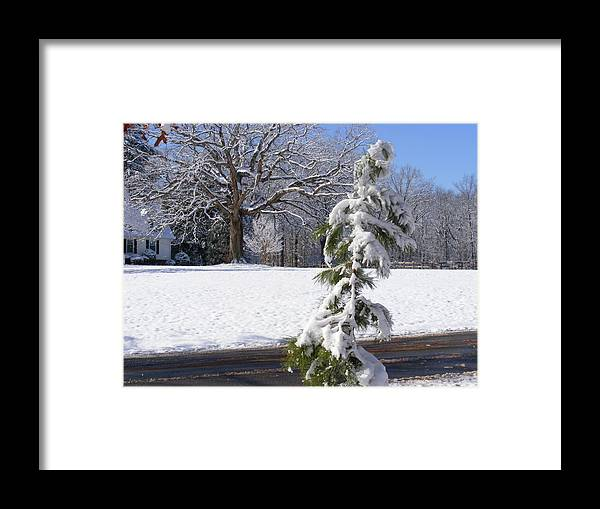 Tree Framed Print featuring the photograph Cold Beauty by Hickory Tree Productions