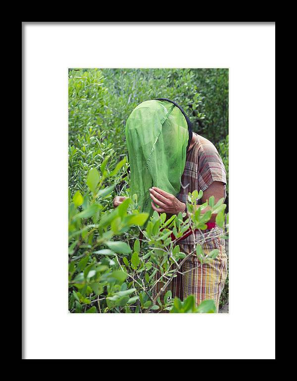 Entomologist Framed Print featuring the photograph Collecting Insects by Alexis Rosenfeld