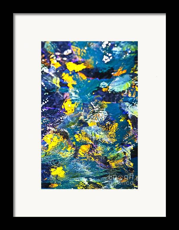 Fish Framed Print featuring the photograph Colorful Tropical Fish by Elena Elisseeva