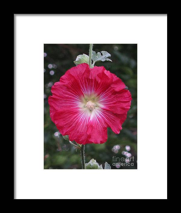 Flower Framed Print featuring the photograph Composed by Tina Marie