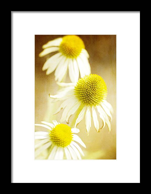 Cone Flowers Framed Print featuring the photograph Cones by Rebecca Cozart