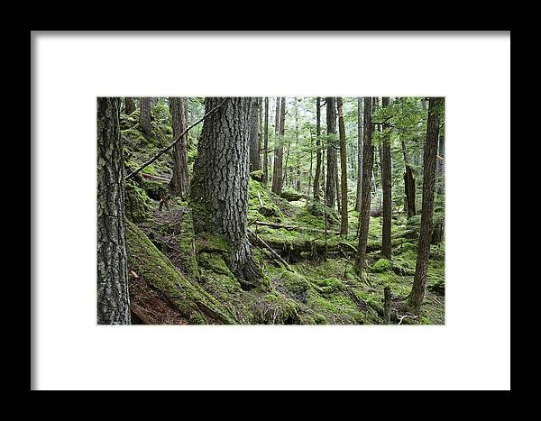Mp Framed Print featuring the photograph Coniferous Forest, Inside Passage by Konrad Wothe
