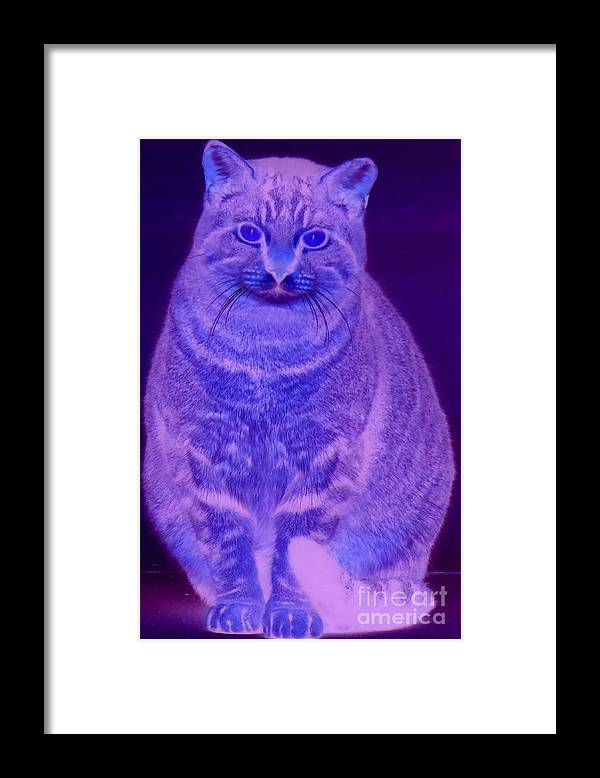 Abstract Framed Print featuring the photograph Conowingo Cat 03 by Rrrose Pix