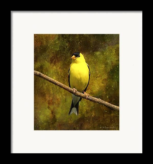 J Larry Walker Framed Print featuring the digital art Contemplating Goldfinch by J Larry Walker