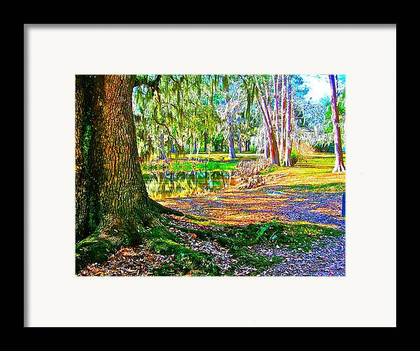 Tree Framed Print featuring the photograph Cool Feeling by Frank SantAgata