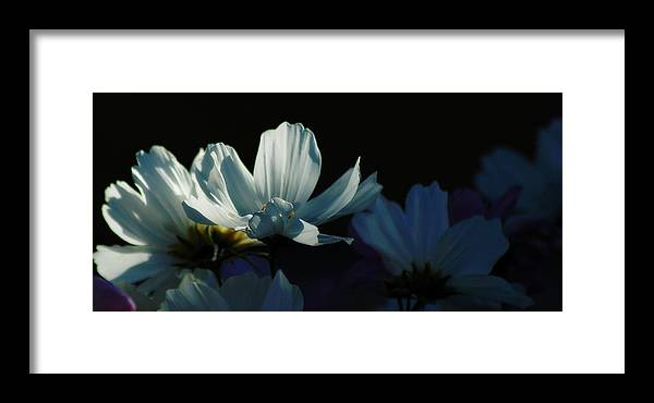 Cosmos Framed Print featuring the photograph Cosmos by Sandra Sigfusson