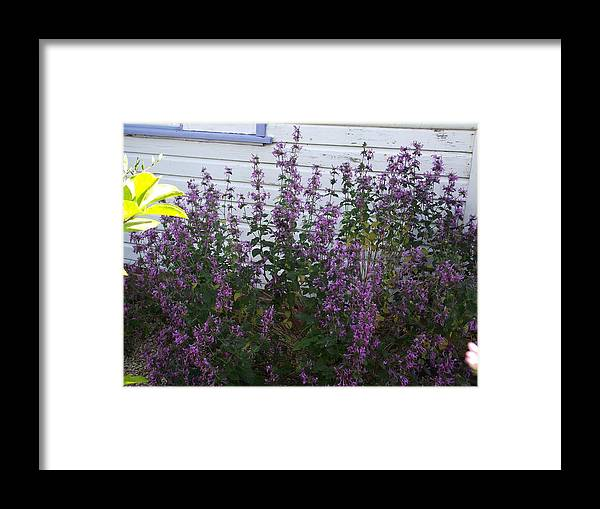 Flower Framed Print featuring the photograph Cottage by Rani De Leeuw
