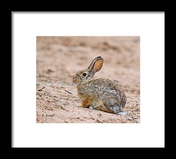Roena King Framed Print featuring the photograph Cottontail Bunny by Roena King