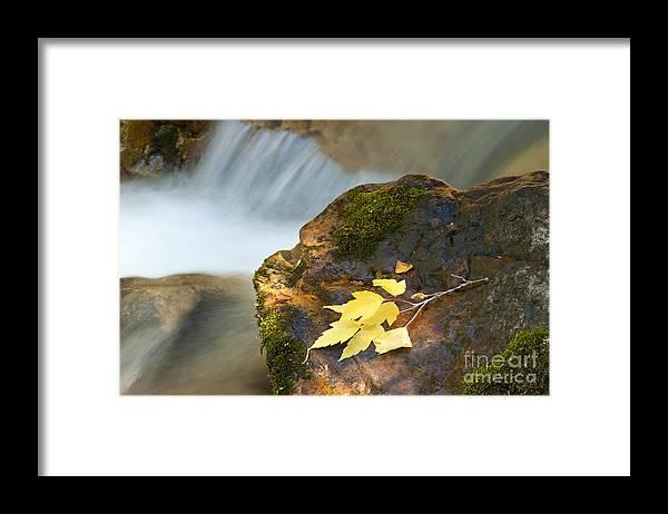 Autumn Framed Print featuring the photograph Cottonwood Cascade in Autumn by Dennis Hammer