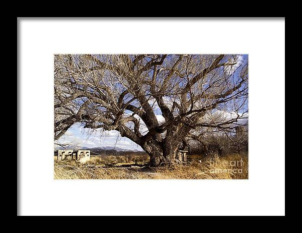 Trees Framed Print featuring the photograph Cottonwood Tree At San Pedro House by Kathy McClure