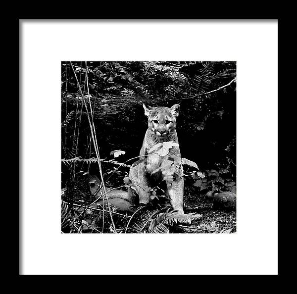 Cougar Framed Print featuring the photograph Cougar In The Northwest Trek Wildlife Park by Tanya Searcy